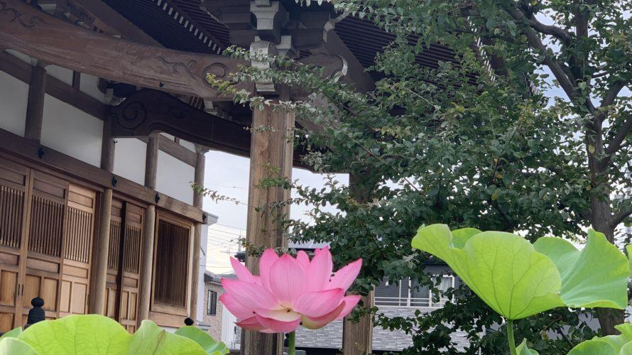 ついに開花